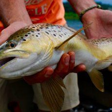 High Water Streamer Fishing